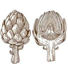 Engraving artichoke vector