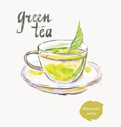 green tea watercolor vector image vector image