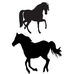 Horse sillhouette vector image