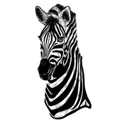 portrait of zebra vector image