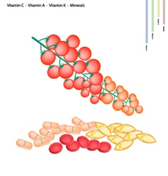 Cherry Tomatoes with Vitamin C A and K vector image