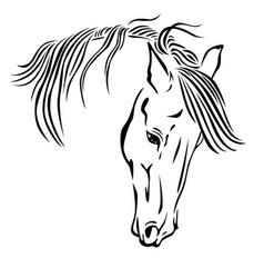 beautiful horse head vector image