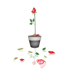 Beautiful Red Rose in Ceramic Flower Pot vector image vector image