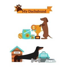 Dachshund dog playing infographic vector