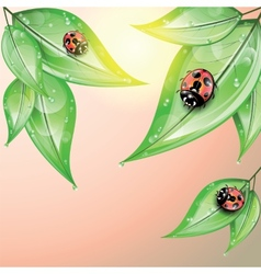 Red ladybugs on the green leaves after the rain vector
