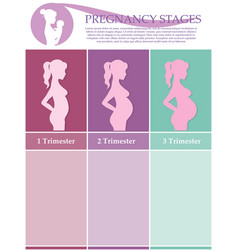 Pregnant woman - first second and third trimester vector