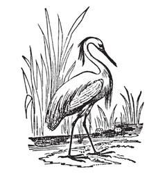 Egret vintage vector