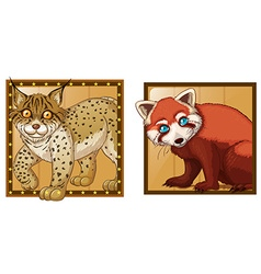 Tiger and red panda on square badges vector