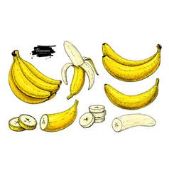 banana set drawing isolated hand drawn vector image
