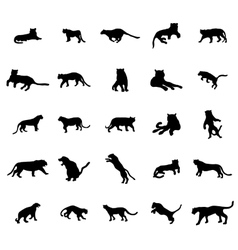 Tiger silhouettes set vector