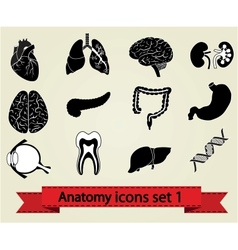 Anatomy icons set 1 vector image
