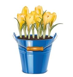Crocuses blooming in bucket vector