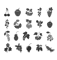 Berries silhouettes icons vector image