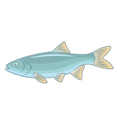 fish ide vector image vector image