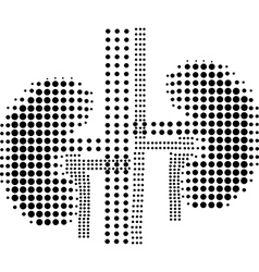 Icon human lungs vector