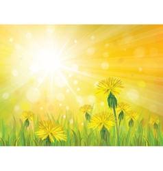 spring yellow sun vector image