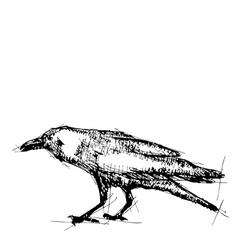 Sketch of crow vector