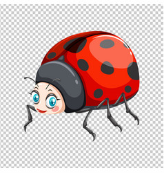 Cute ladybug on transparent background vector