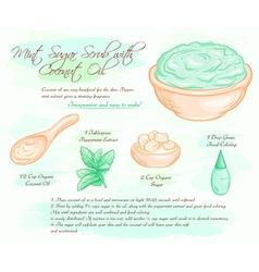 hand drawn of mint sugar salt scrub with coconut vector image