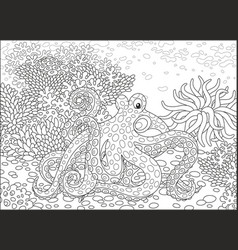 spotted octopus vector image