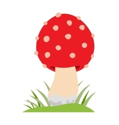 Amanita poisonous mushroom isolated on vector