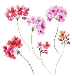 Watercolor geranium floral set vector image vector image