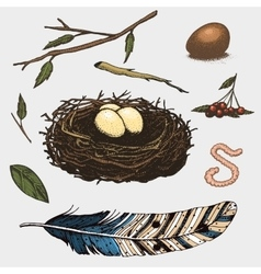 Set of hand drawn nest leaves berry egg and vector