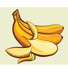 Yellow bananas vector image vector image