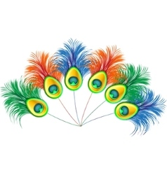Peacock feathers on white background vector image