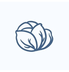 Cabbage sketch icon vector image
