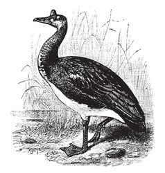 Spur winged goose vintage vector