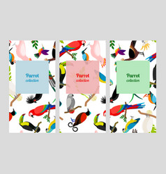 Parrot flyers collection with birds patterns vector