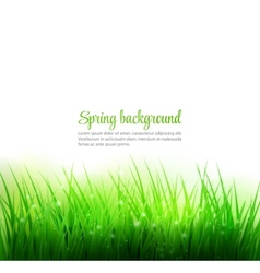 Natural green grass background vector