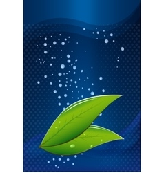 tea leaves on a blue background with water drops vector image