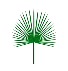 Green palm leaf on isolated white background vector image vector image