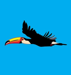 Toucan parrot in flight vector image