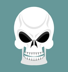 Skull with grin skeleton head isolated cranium in vector