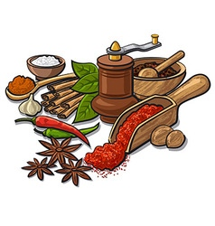 spices and flavors vector image vector image