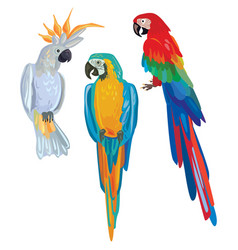 cartoon parrots vector image vector image