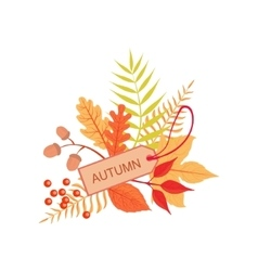 Set Of Orange Leaves With The Tag As Autumn vector image