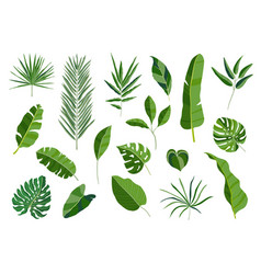 set of tropical leaves different green leaf vector image vector image