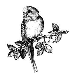 Wavy parrot on brunch fo pet shop vector