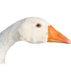 Goose head vector