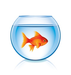 goldfish in bowl isolated vector image