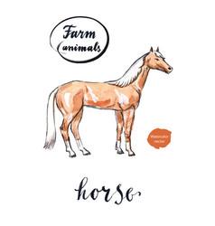 Arabian horse vector