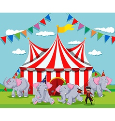 Elephant show at the circus vector