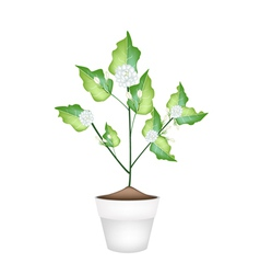 A Jasmine Flower in Ceramic Flower Pot vector image vector image