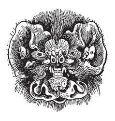Chin leafed bat head vintage vector