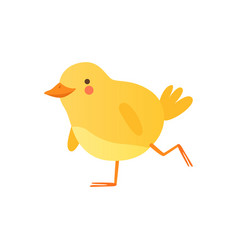 Cute baby chicken walking funny cartoon bird vector