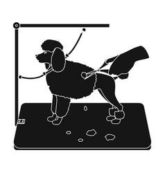 Haircut pet in a stylish salon petdog care vector